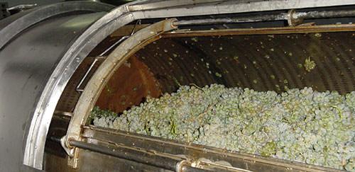 Uvas en deposito